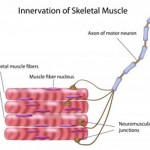 Make Your Muscles Smarter